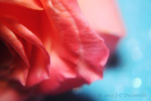 Sorbet by jdrainville