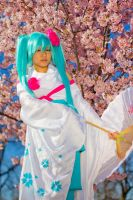 Cherry Blossom Miku by BertLePhoto
