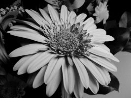 Flower in Black and White by HaloReach726