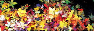 Leaves Multicolor Dual Screen by Pierre-Lagarde