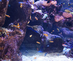 Aquarium Photo 5 by PeppermentPanda