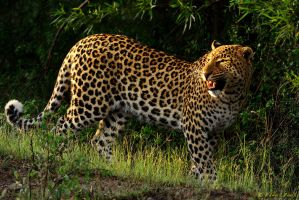 Pilanesberg Beauties by NagWolf