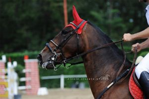 Showjumping IV by firegold