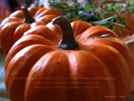 .mini-pumpkins. by Foozma73