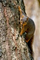 Squirrel by photo67