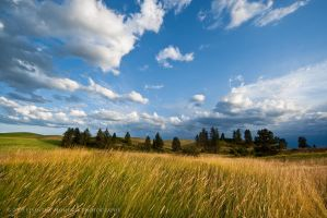 Grass and Sky by inessentialstuff