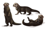 Otter commission by Peace-Colby