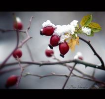 First snow. by Phototubby
