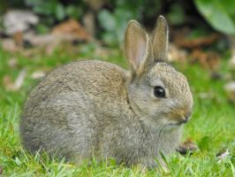 Young Rabbit at Antony House 3 by Sylars-Apprentice