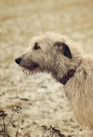 vintage dogs 03 by jpoker86