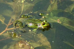Froggy Session 4 by steppeland