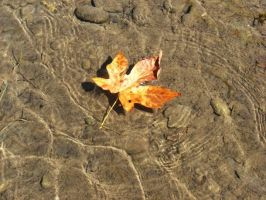 Leaf in Water by MeBeingBored15