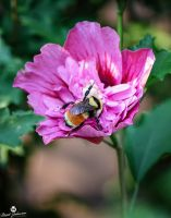 The Bumble Bee by mjohanson