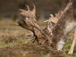 Fallow 04 - Mar 11 by mszafran
