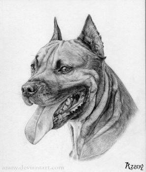 Staffordshire Bull Terrier by Azany