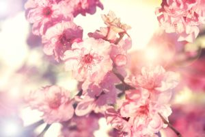 Spring Symphony. by incredi
