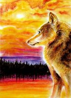 Wolf Watching Sunset by FeraCoyote