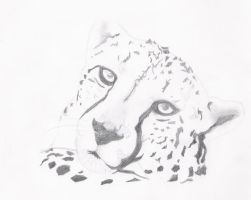 Cheetah by OliLauMad