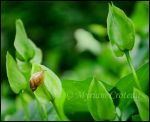 Eli the snail in the green land by Aliniel