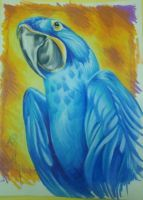hyacinth macaw: commission for jeannine's monster by resonanteye