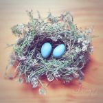 Blue Eggs by Brumae-Art