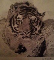 Tiger by ctcoops