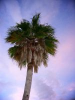 Palm by bkueppers