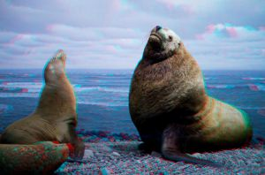 Stereoscopic Seals by dvreflex