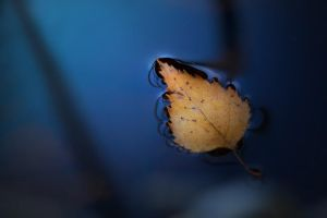 leaf in water by Anti-Pati-ya