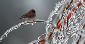 Ice Storm Bird by kl61