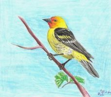 Western Tanager by Blackwolfoffireworks