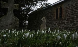 Early Snow Drops in the Church Yard by LouisTN