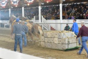 Horse Weight Pulling Competition 3 by Miss-Tbones