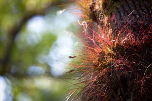 Bartrams Air Plant by TomFawls