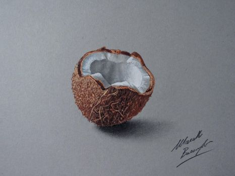 Coconut DRAWING by Marcello Barenghi by marcellobarenghi
