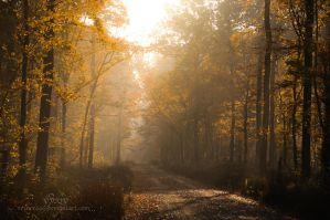 Misty Road by reznor666