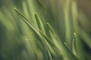 Within Reach by Serenityfhotography