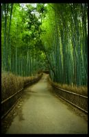 Bamboo Path by Wictorian-Art