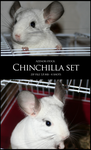 Chinchilla set by Azenor-stock