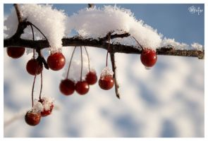 cherry_snow by MARGOart