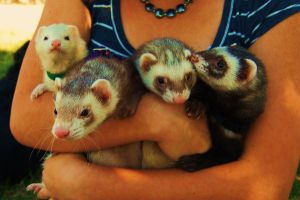The Ferrets by jessi97603