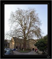 Bayeux, a very old tree by J-Y-M