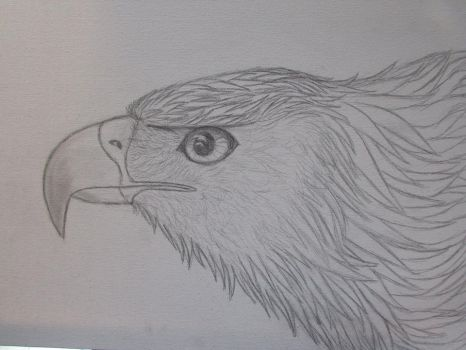 Golden Eagle Step 2 by akyta680