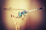 Dragonfly by addy-ack