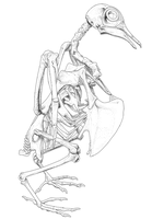 Pigeon Skeleton by StygimolochSpinifer