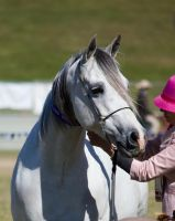 STOCK Gold Coast Show 112 by fillyrox