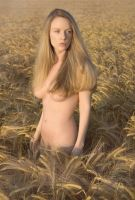 Golden Harvest by Muse1908
