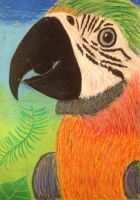 Parrot in Oil pastels by GreenDragon42