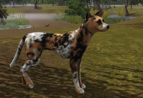The Sims 3 Pets : African Wild Dog by huntinlabs