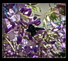 Glycine with bee by jennystokes